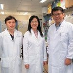 CUHK Discovers an Essential Oncogene in Non-Alcoholic Fatty Liver Disease-Associated Hepatocellular Carcinoma
