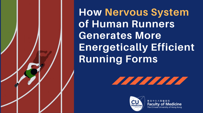 A Joint Study by CUHK, PolyU and Western Sydney University Discovers how the Nervous System of Human Runners Generates More Energetically Efficient Running Forms